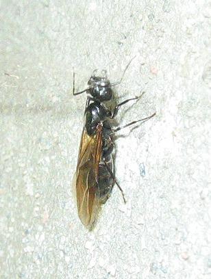 Des visiteuses chez moi des fourmis - Bicarbonate de soude fourmis ...