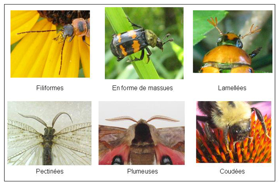 les Différents Types d'Insectes